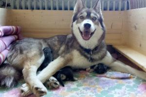 Kira und ihre Babys