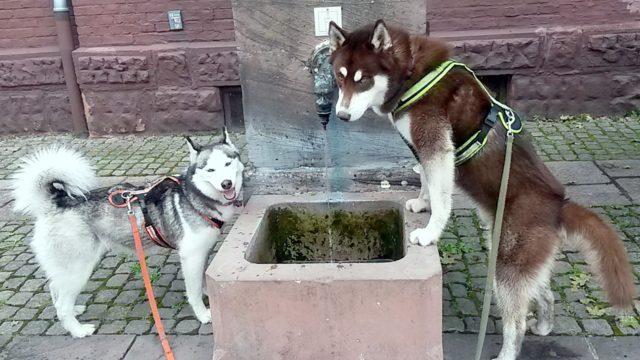Wo ist der Rülpe hin?