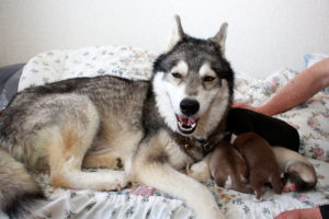 Nukka und ihre Babys