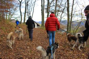 Wanderung durch Wald und Feld