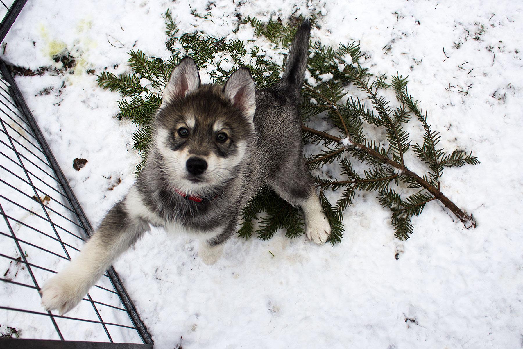 Spaß im Schnee / Snow Fun