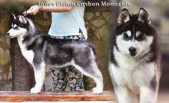 Inner Vision Carbon Monoxide