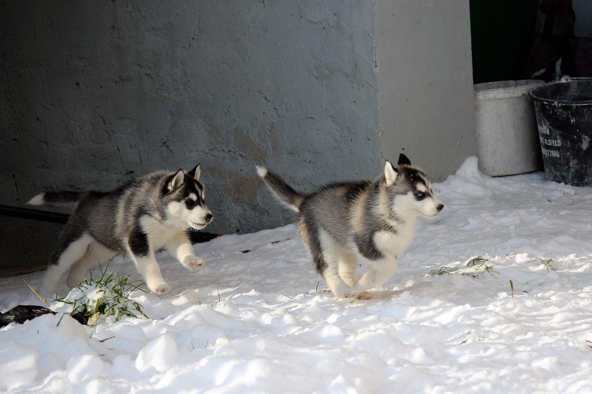 Schneespaß für die Äffchen