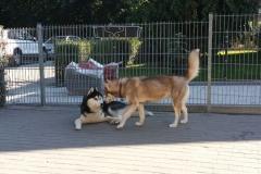 Doby und Kira