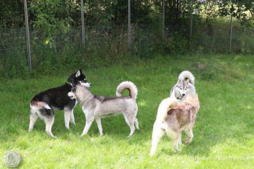 Yuko, Ezri, Conan und Kira