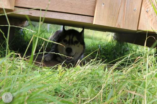 Ezri versteckt sich gern unter der Hütte.