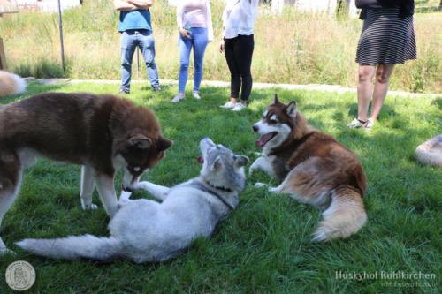 Rot und Weiß: Mato, Zelda und Sammy