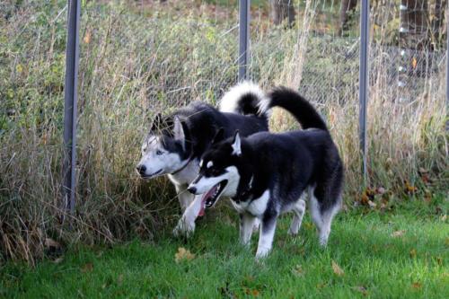 Sisko und Koda